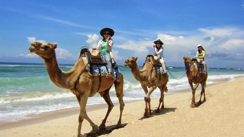 Picture of Camels