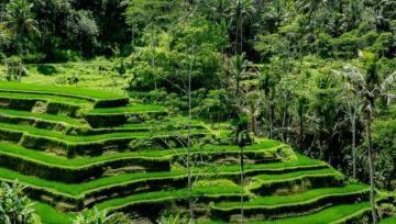 Ubud the Heart of Bali