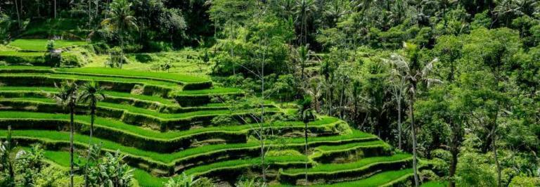 Ubud, the heart of Bali