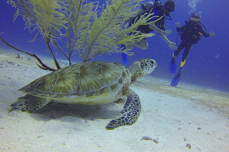 Diving in Bali Beaches